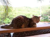 This local cat knows how to chill out at the Tree Lounge at Loterie Farm