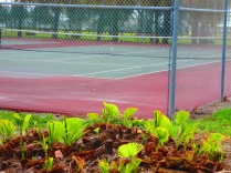 Free tennis courts where we play doubles each week