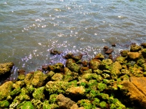 Mossy rocks and calm waters along North Flagner Drive, West Palm
