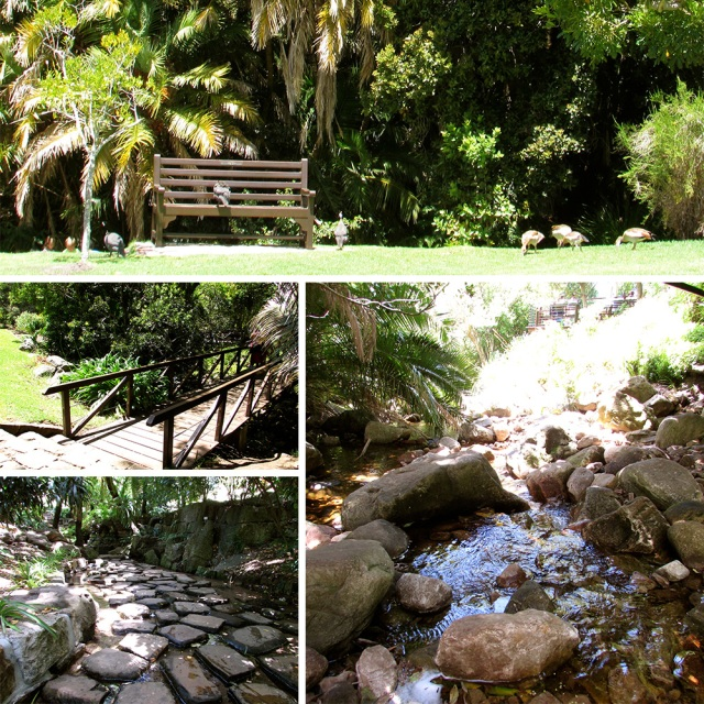 Stepping stones, catching tadpoles and crossing bridges at Kirstenbosch Gardens.