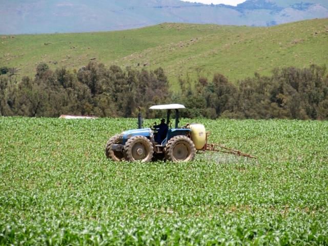Spraying the maize crops at Bonny Ridge farm
