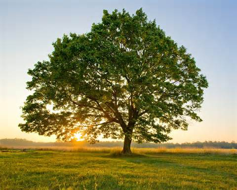 Donate a tree and reduce your carbon footprint