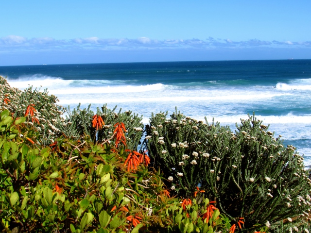 Indigenous flora with the Atlantic ocean