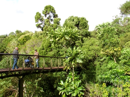 The Boomslang walkway guides you through the tree tops