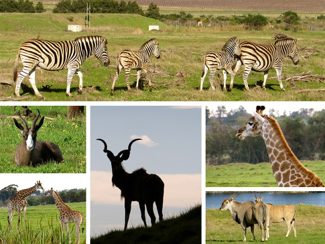 A variety of wildlife spotted on our game drive around Villiera Wildlife Sanctuary