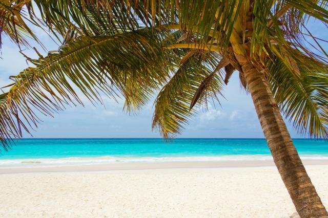 beach-beautiful-blue-coast-40976.jpeg
